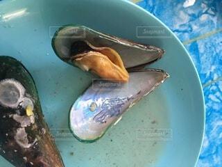 ブルーと貝料理の写真・画像素材[4666641]