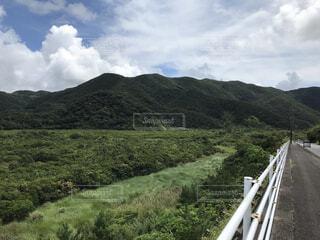 奄美大島のマングローブの写真・画像素材[4684187]
