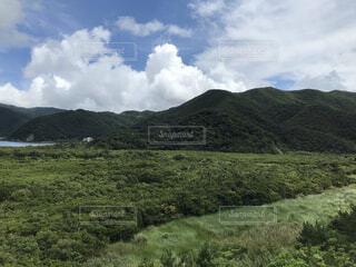 奄美大島のマングローブの写真・画像素材[4684186]