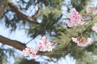 花の写真・画像素材[412568]
