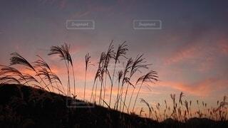 背景に夕日のある木の写真・画像素材[4669264]