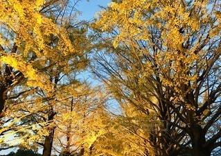 秋の色の写真・画像素材[4752909]