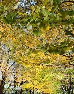 秋の風景の写真・画像素材[4752908]