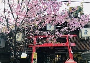 ブラジルにある日本料理レストランの写真・画像素材[4800418]