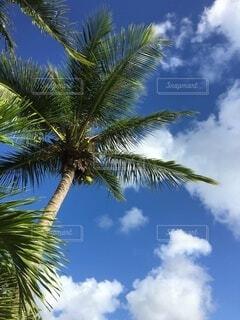 青い空、白い雲、緑のヤシの写真・画像素材[4668142]