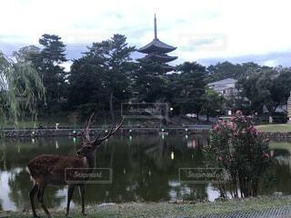 奈良の魅力の写真・画像素材[4668374]
