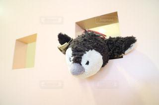 ペンギン - No.207555