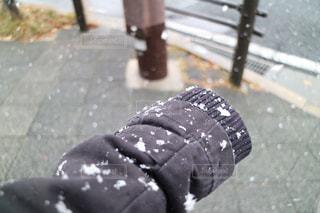 冬の写真・画像素材[311820]