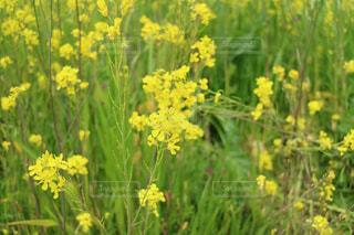 花の写真・画像素材[417636]