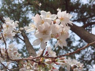 春 - No.417637