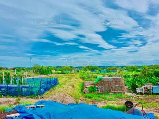 大きな農場フィールドの写真・画像素材[716654]