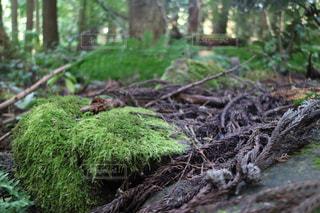 森の中の工場の写真・画像素材[751182]