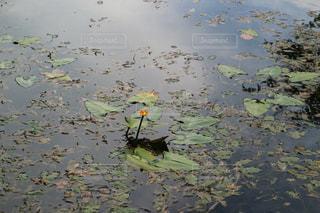 水の体の上を飛んでいる鳥の写真・画像素材[751186]
