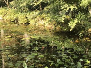 近くの緑豊かな緑の森の写真・画像素材[751188]