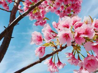 植物にピンクの花の写真・画像素材[1081253]