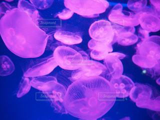 クラゲのクローズアップの写真・画像素材[2088629]