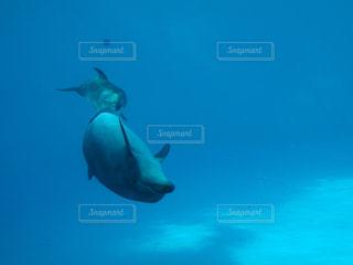 水中で泳いでいる魚の写真・画像素材[2088633]