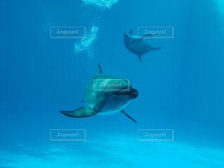 水中で泳いでいる魚の写真・画像素材[2088634]