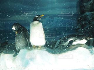 水の中を泳いでいる鳥の写真・画像素材[2088637]