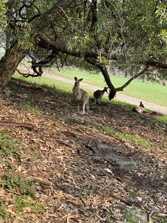 木の隣に立っているキリンの群の写真・画像素材[2888014]