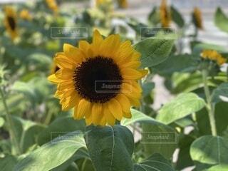 花のクローズアップの写真・画像素材[3656026]