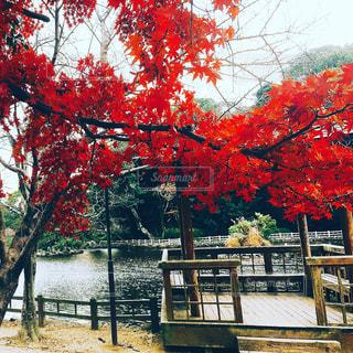 No.283410 風景