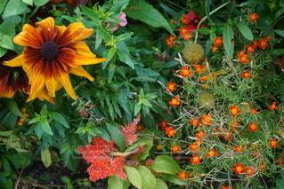 植物の色とりどりの花の写真・画像素材[4771268]