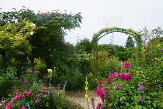 庭園の写真・画像素材[4771275]