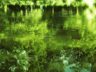 自然の写真・画像素材[207596]