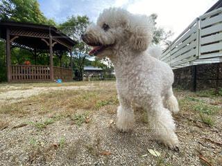 ドッグランを楽しんでいる犬の写真・画像素材[4673002]
