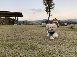 ドッグランではしゃぐ犬の写真・画像素材[4673681]