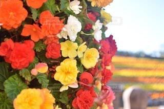 カラフルな花の写真・画像素材[4673672]