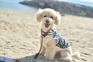 砂浜の上に笑顔で座っている犬の写真・画像素材[4673673]