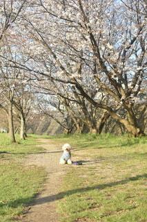 公園でポツンとおすわりトイプードルの写真・画像素材[4675333]