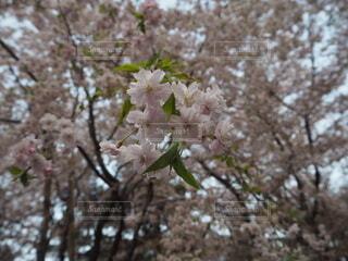 日本の春の写真・画像素材[4676684]