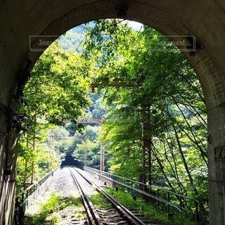 夏の緑に覆われた廃線になった線路の写真・画像素材[4676021]