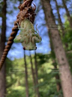 蝉の羽化の写真・画像素材[4677390]