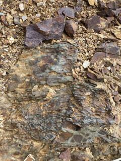 岩の写真・画像素材[4677418]