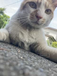 猫ローアングルの写真・画像素材[4678725]