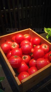 トマトの写真・画像素材[218130]