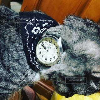 猫の写真・画像素材[596961]
