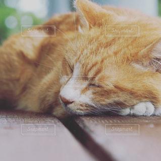 近くに眠っている猫のアップの写真・画像素材[809881]