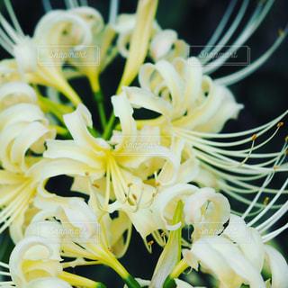 近くの花のアップの写真・画像素材[970320]