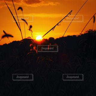 日没の前にトラフィック ライトの写真・画像素材[1451613]