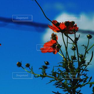 近くの花のアップの写真・画像素材[1469458]
