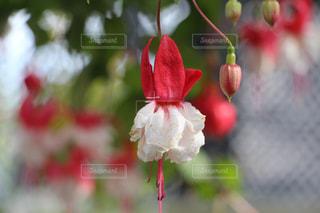 お花畑の写真・画像素材[208510]