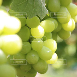 果物の写真・画像素材[208545]