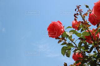 花の写真・画像素材[208556]