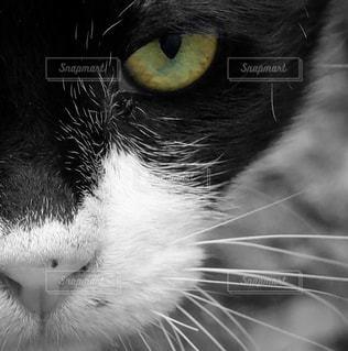 猫の写真・画像素材[209771]