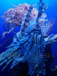 魚の写真・画像素材[208536]